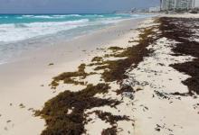 Photo of Millonaria inversión para atender recale de sargazo en Quintana Roo