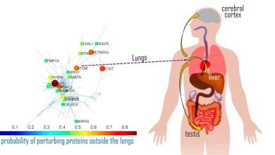 Photo of ¿Por qué la COVID-19 descarga su daño en unos órganos y no en otros? Las matemáticas explican