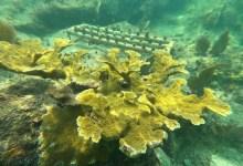 """Photo of Seguro paramétrico contra huracanes ayudará a cubrir daños en arrecifes provocados por """"Delta"""""""
