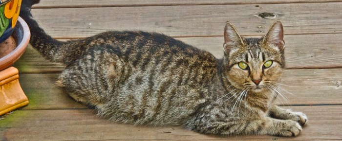 Meet Mama, Our First Feral Cat