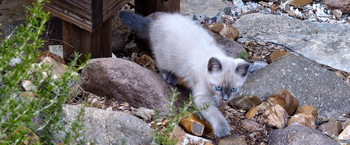Feral Cat Fridays: A Young Turk Arrives