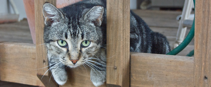 Feral Cat Fridays: Citizen Duff