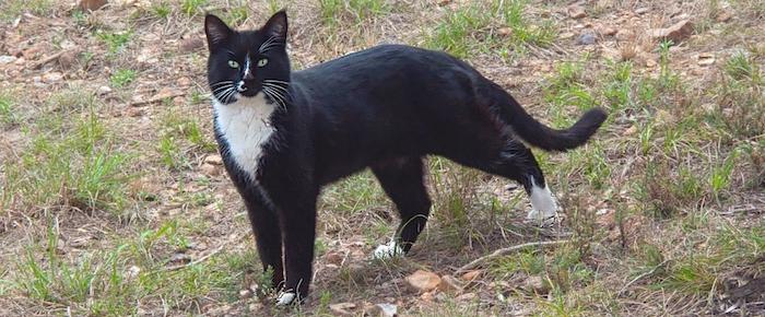 Feral Cat Fridays: Call Me Smudge