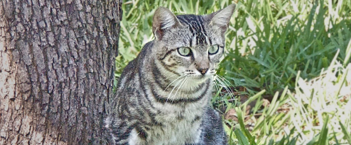 Feral Cat Fridays: Hi, I'm Larry …