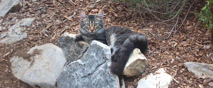 Feral Cat Fridays: Robin Fuzzy-Breast