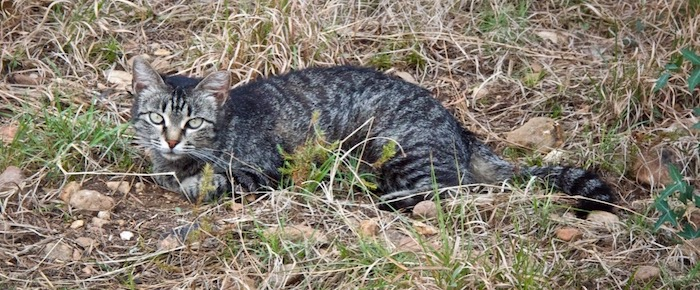 Feral Cat Fridays: A Stranger In the House