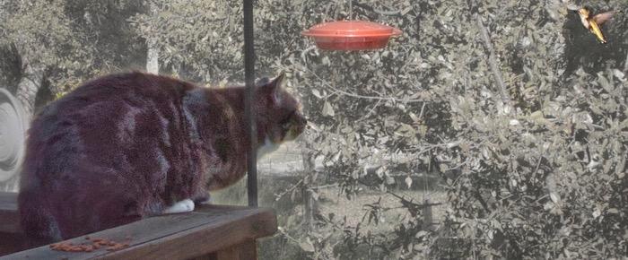 Feral Cat Fridays: Meet Mr. Stoney