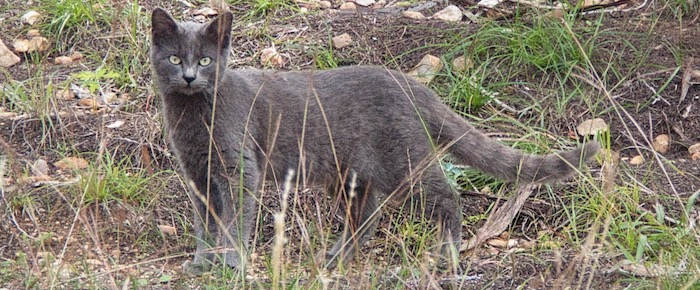Feral Cat Fridays: A Wish For No Mo'