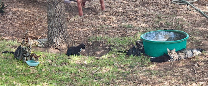 Feral Cat Fridays: In The Footsteps Of Boots