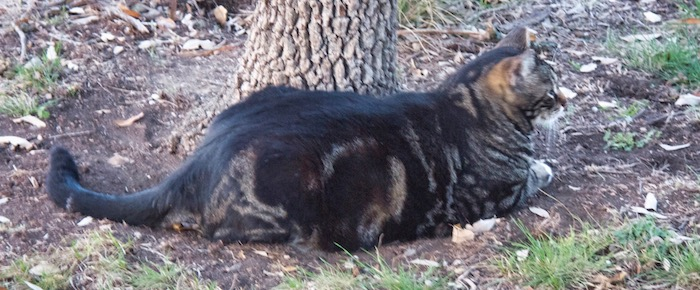 Feral Cat Fridays: A Salute To The General