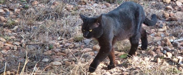 Feral Cat Fridays: A Trio Of Black Cats