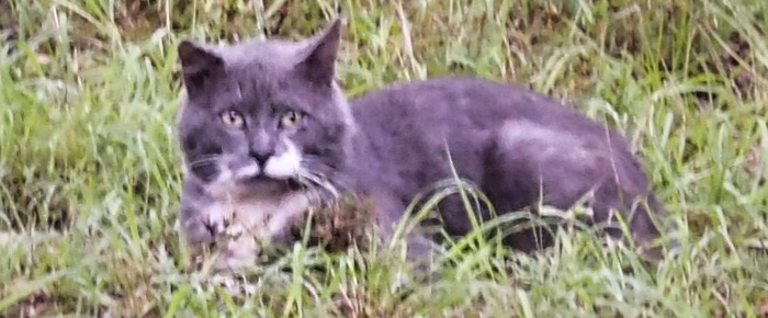 Feral Cat Fridays: A Short Tale Of Short Tails