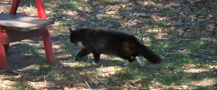 Feral Cat Fridays: Two Nomads Passing Through