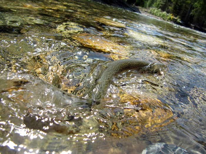5 reasons small stream trout are kickass dryft fishing for Fish and stream