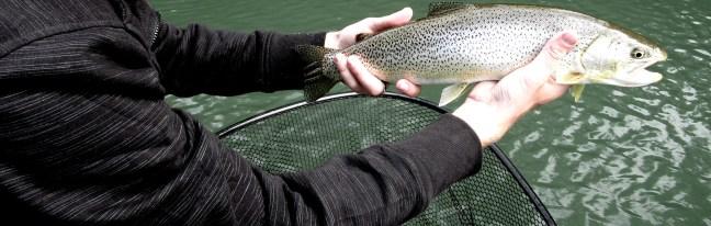Searun Cutthroat fly fishing DRYFT
