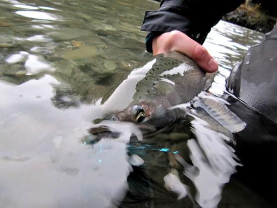 late-season-coho-fly-fishing DRYFT Waders