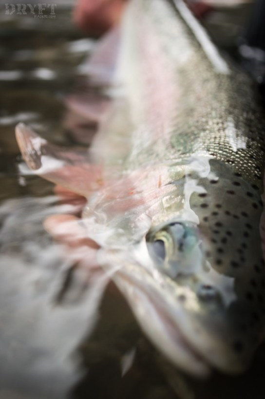 DRYFT Fishing - winter