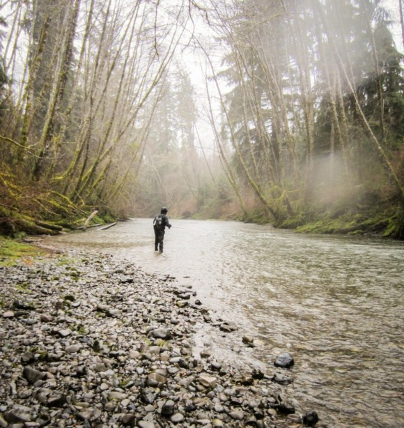 Rainforest fly fishing