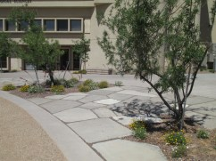 urbanite area, native trees and clumping flowering groundcovers