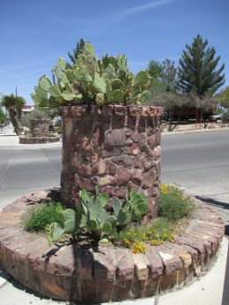 Opuntia ellisiana in planters