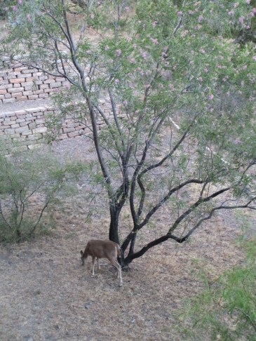 too sultry in Austin and San Antonio for deer, not just people