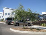 yet this Screwbean Mesquite several parking spaces away is pruned nicely