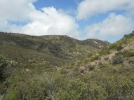 ...but this vast area was actually an old wildfire burn, but it sure looked like Malibu Canyon!