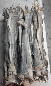 Stockfish Panla Osan
