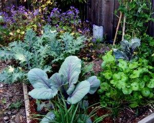 cabbage, kale, miners lettuce, geranium