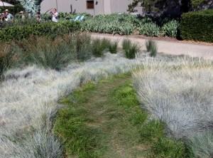 Carex pansa Pathway