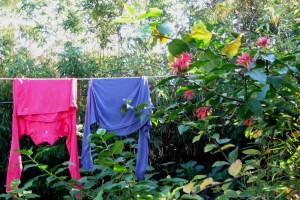 Fuschia, Spicebush, and Laundry