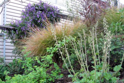 Heuchera, Ninebark, Wind Grass, Hardenbergia