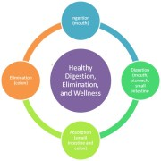 Healthy Digestion, Elimination and Wellness