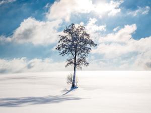 Allgäu-Wandbilder Winter