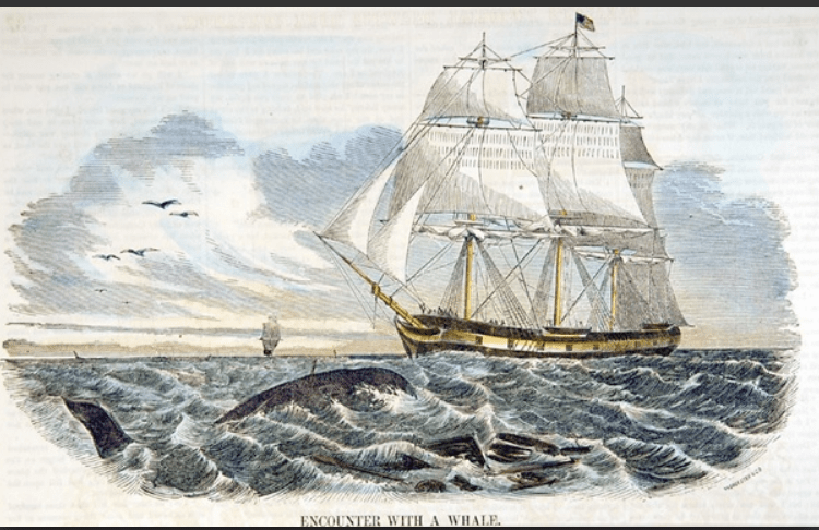 Illustration of Whaling Ship