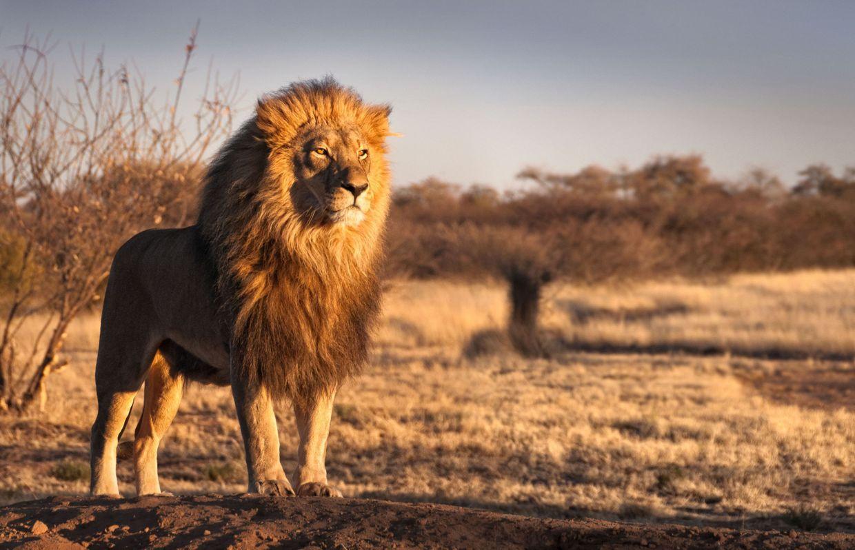 Loup Ours Lion Ou Dauphin Le Sommeil Decrypte