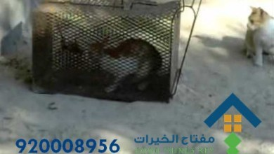 افضل شركة صيد قطط جنوب الرياض 920008956