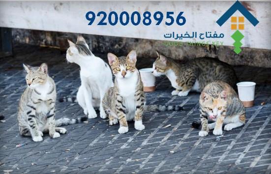 افضل شركة صيد قطط غرب الرياض 920008956
