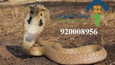 افضل شركة مكافحة الافاعي شرق الرياض 920008956