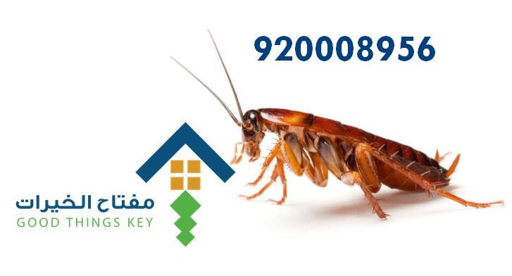 افضل شركة مكافحة الصراصير بالرياض 920008956