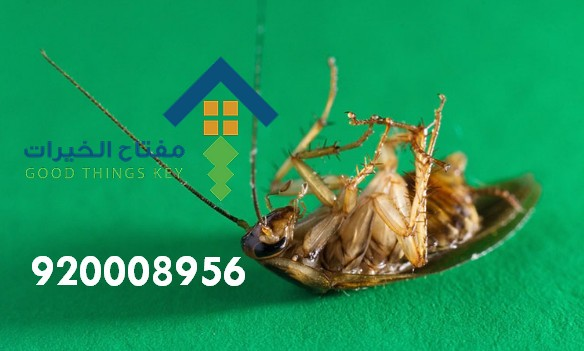 افضل شركة مكافحة الصراصير غرب الرياض 920008956