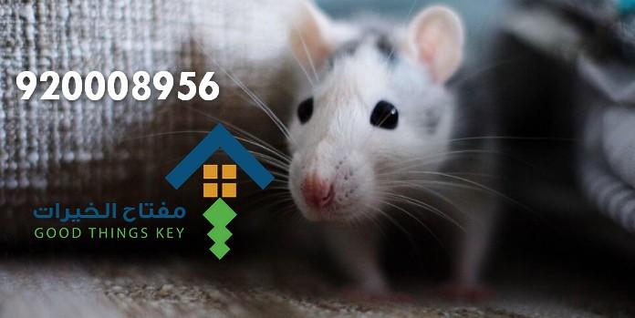 افضل شركة مكافحة الفئران شمال الرياض 920008956