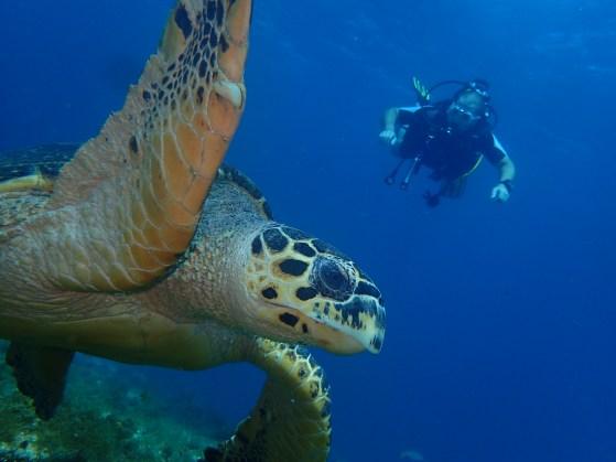 plongeur et tortue