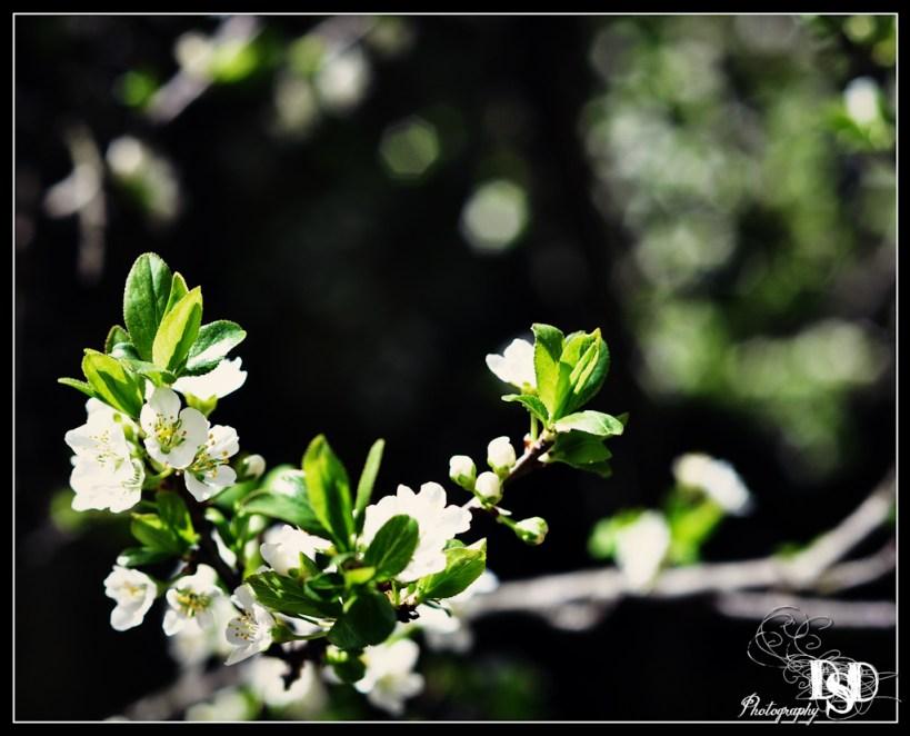 Syringa Bloom Professional Photography DSD Photography
