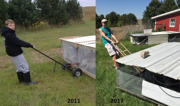Jacob our Chicken Tractor Puller, then and now and soon to be on to other things.
