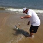 thresher sharks, atlantic fish, cape henlopen state park,