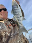 striped bass, delaware, rockfish, sussex county, linesider,