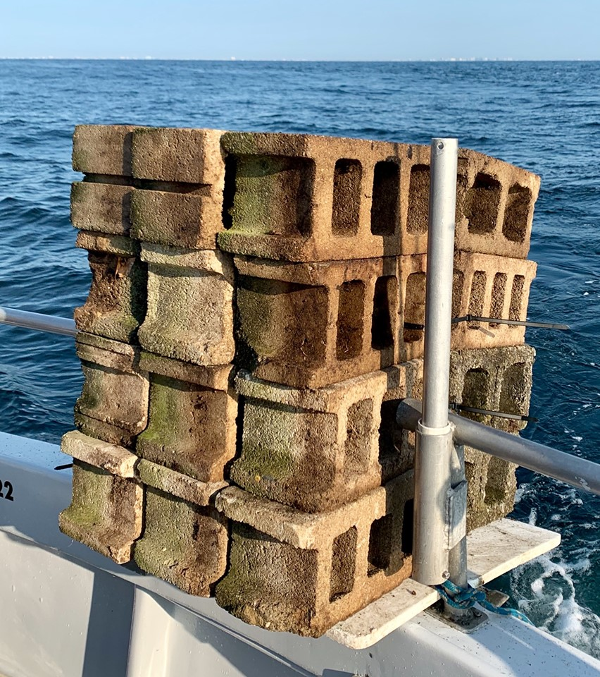 ocean city reef foundation, maryland, morning star, oc reef