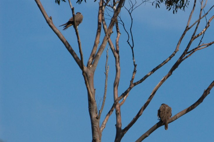 Tree Sitting. We were delighted to find this pair at rest