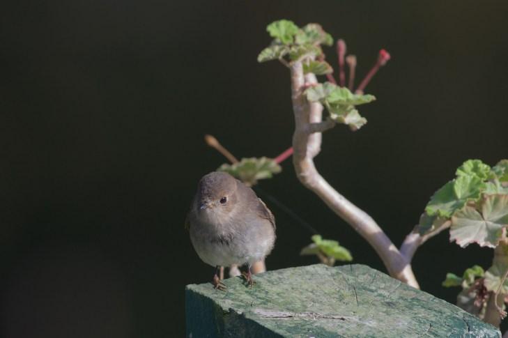 Meet Penny, a bird that has indeed stolen my heart